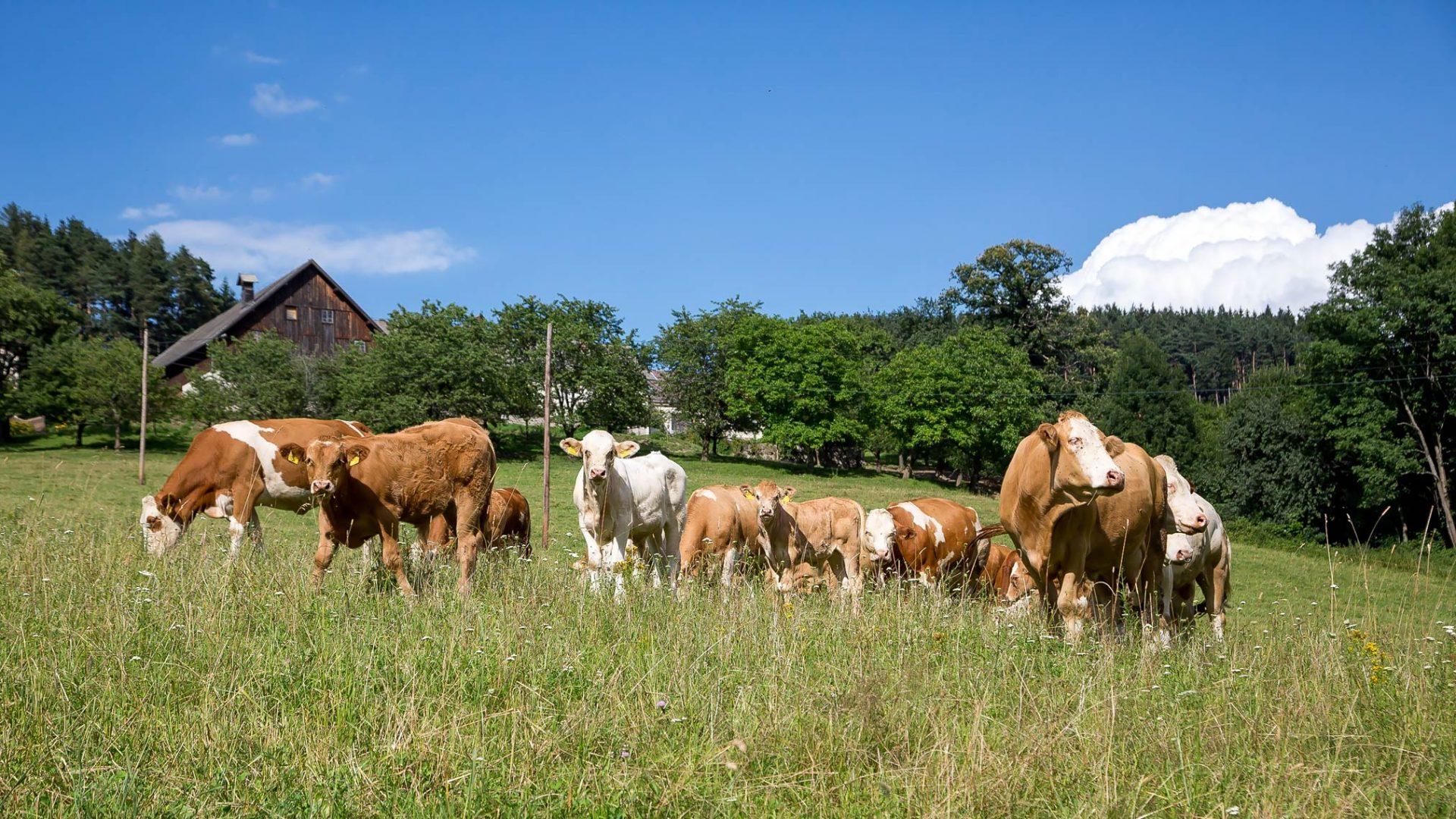 Holiday on the farm Wachahof