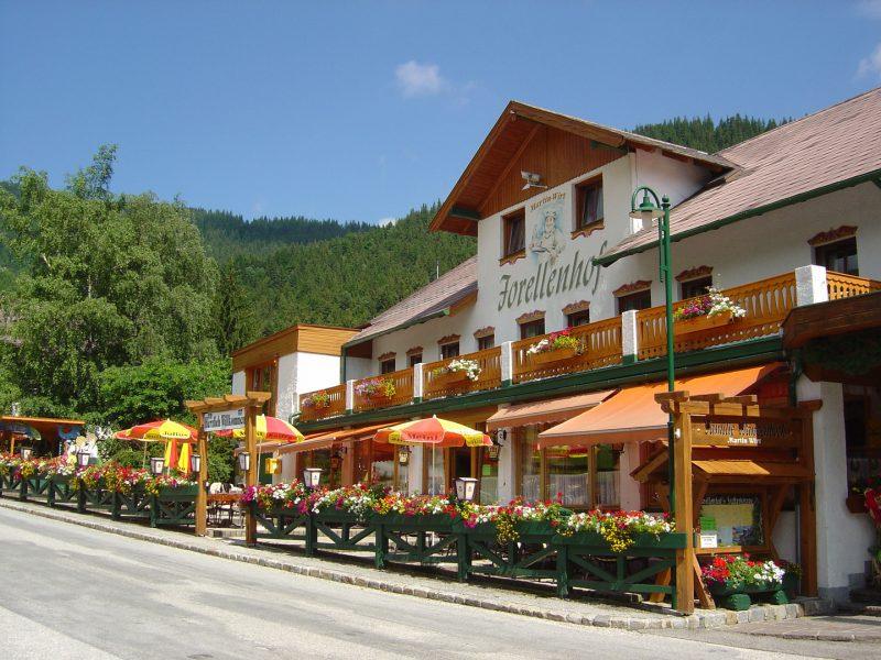 wanderhotel-forellenhof-puchberg2(c)forellenhof-zwickl